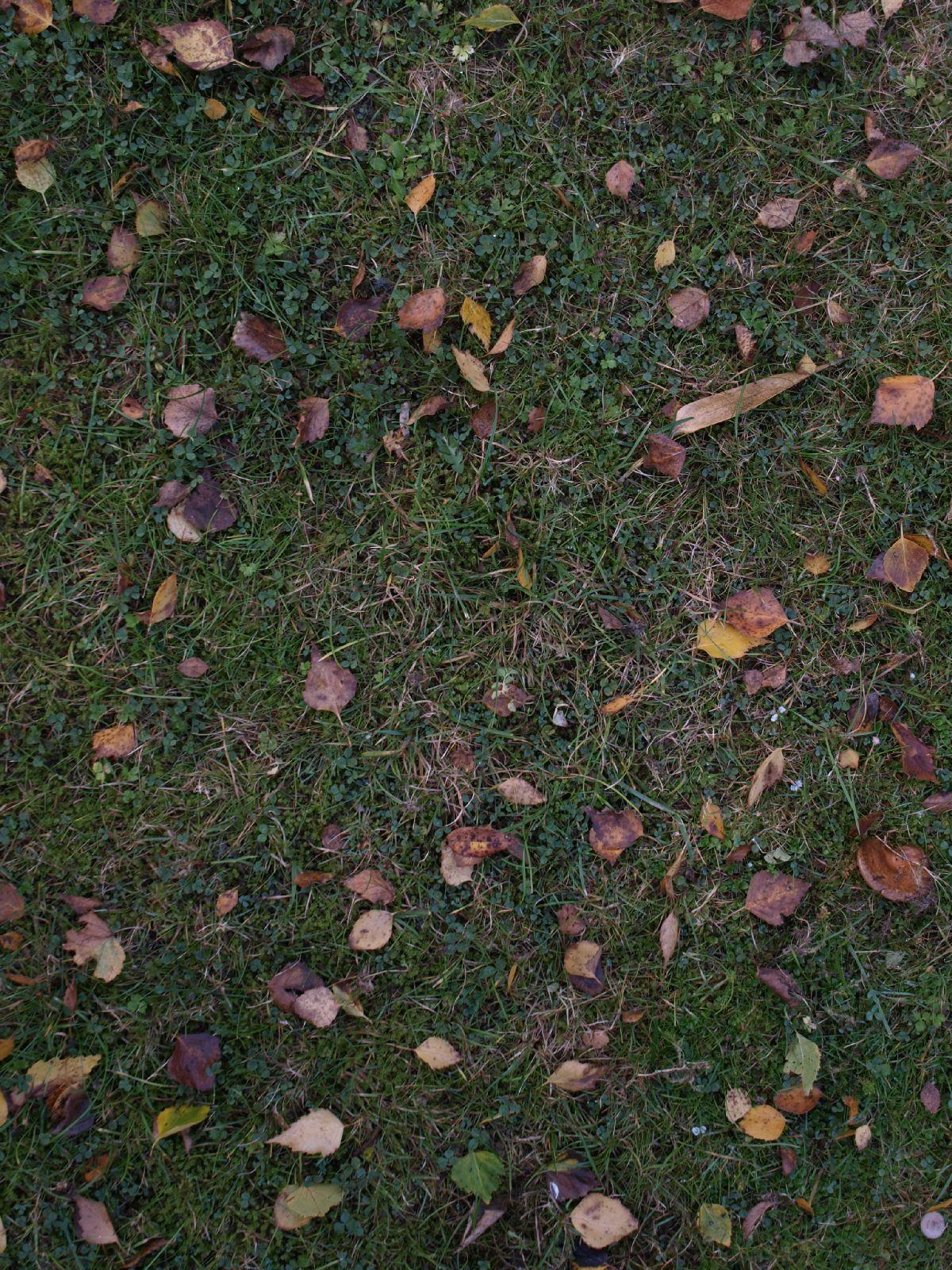 Boden-Gras-Moos-Blumen_Textur_A_PA116113