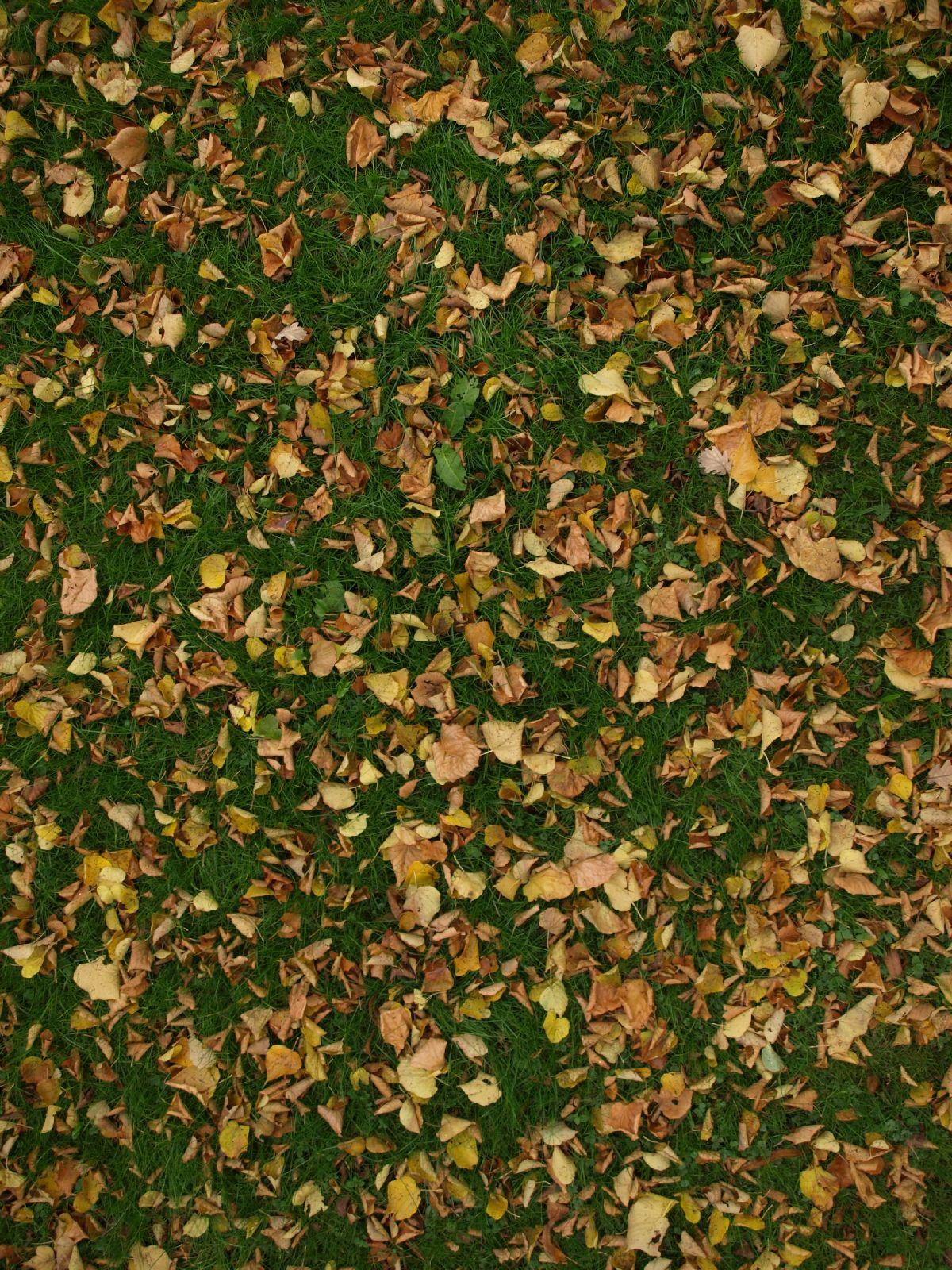Boden-Gras-Moos-Blumen_Textur_A_PA250541