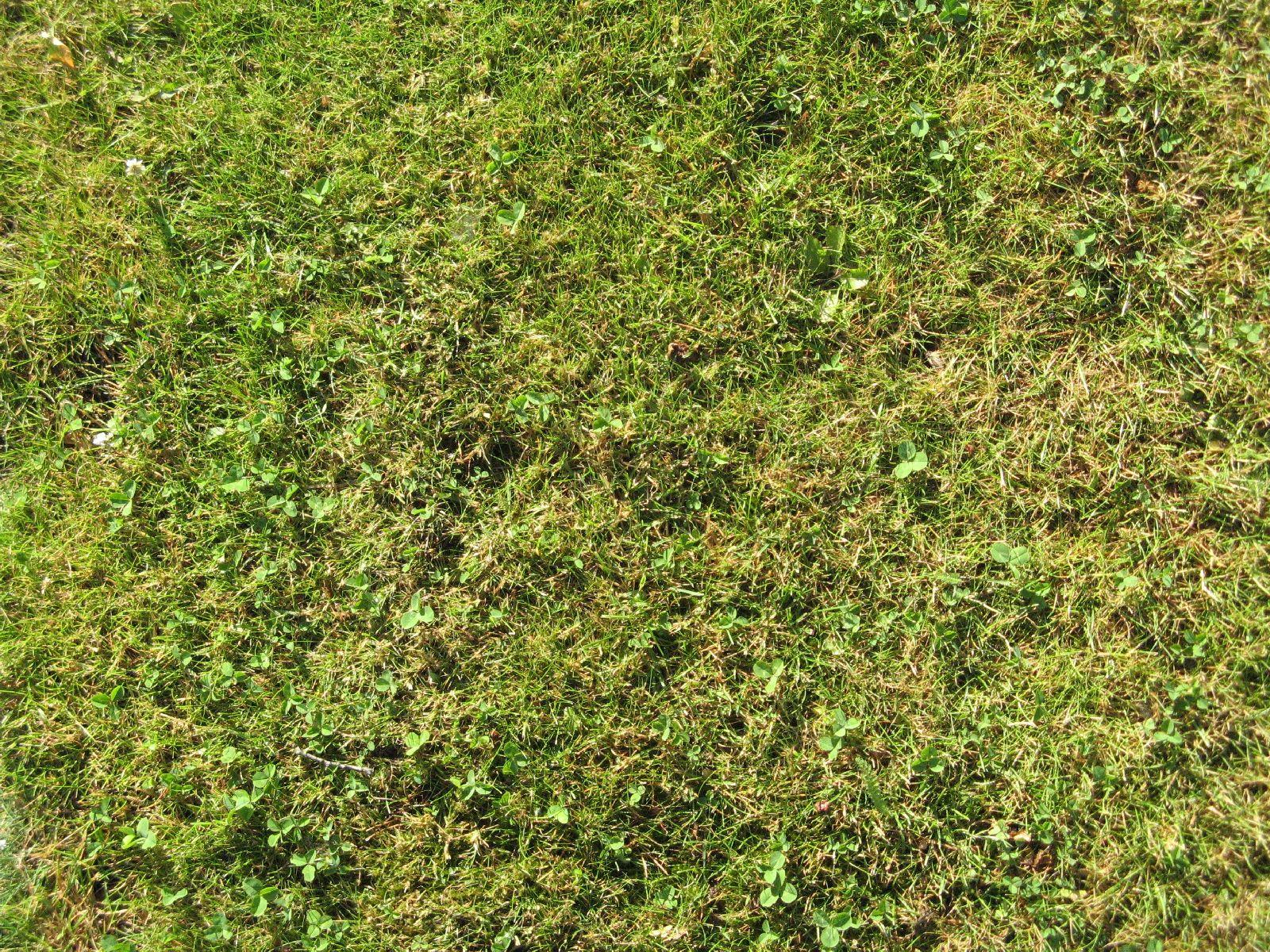 Boden-Gras-Moos-Blumen_Textur_B_00762