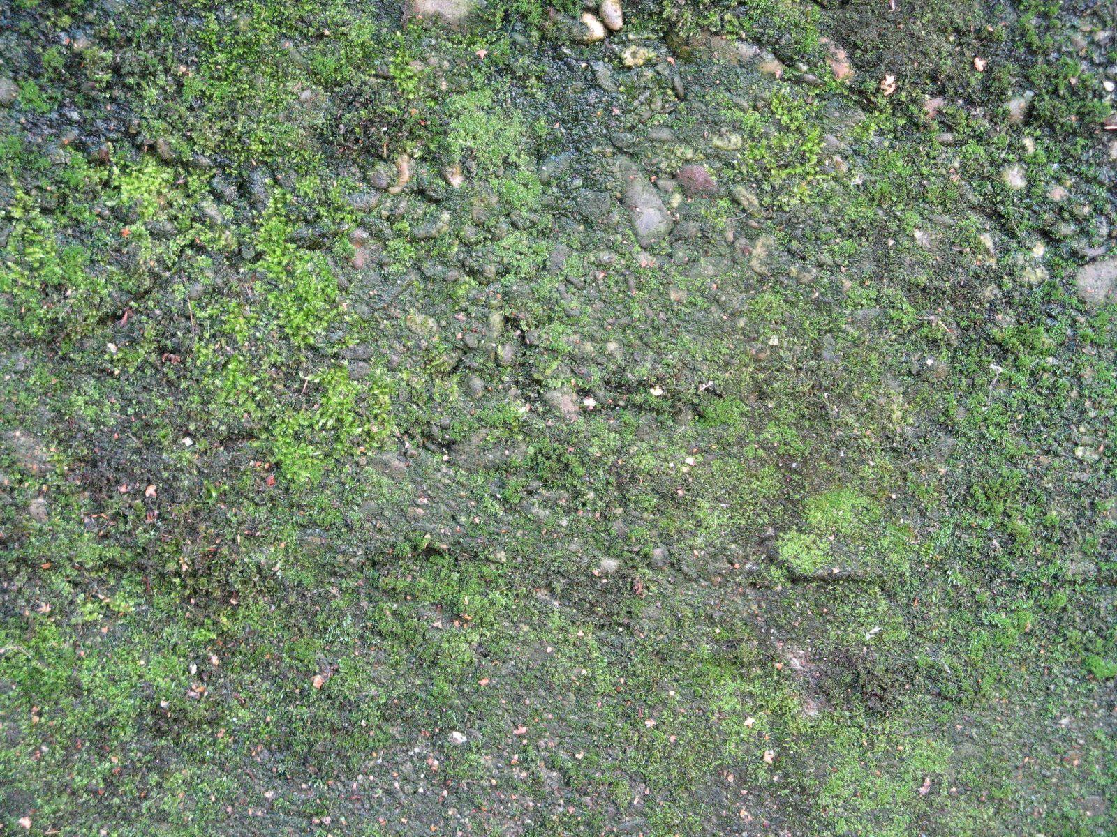 Boden-Gras-Moos-Blumen_Textur_B_00790