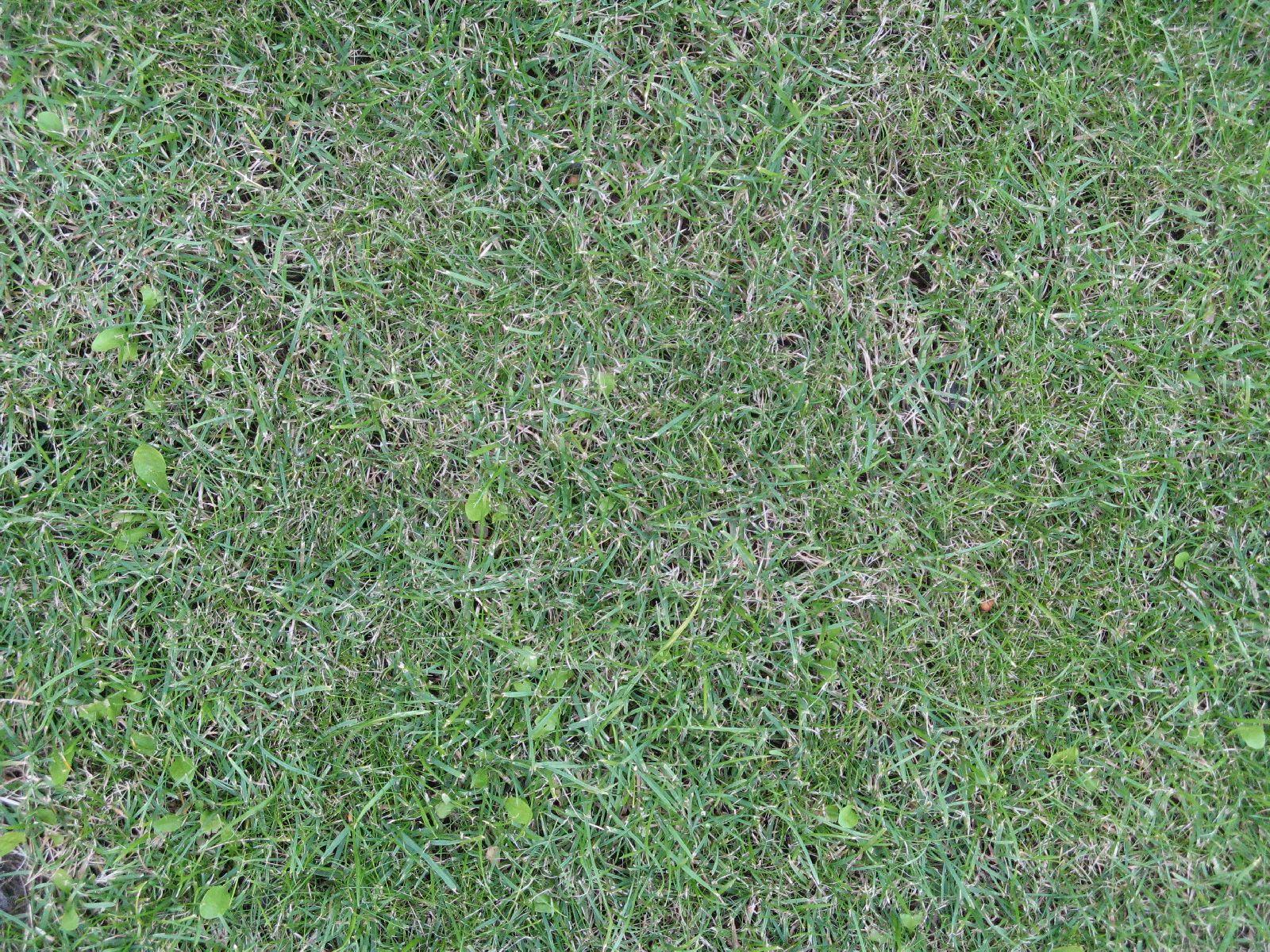 Boden-Gras-Moos-Blumen_Textur_B_00869