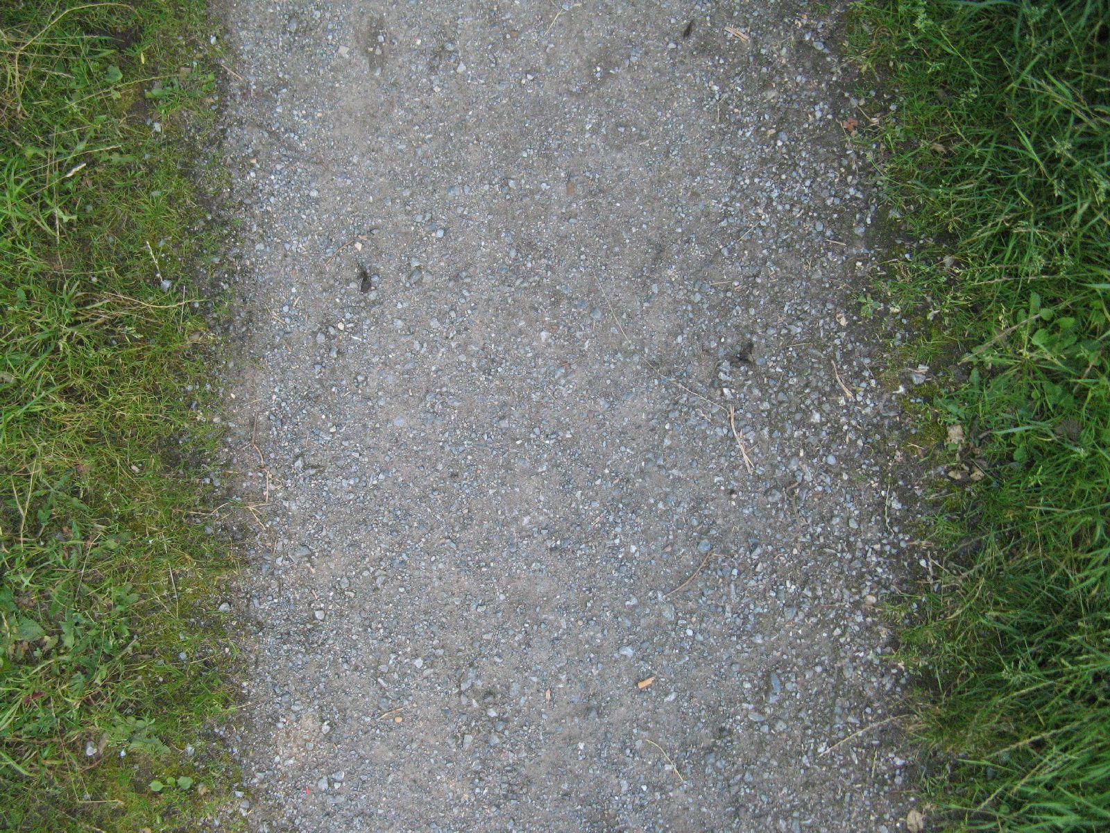 Boden-Gras-Moos-Blumen_Textur_B_00902
