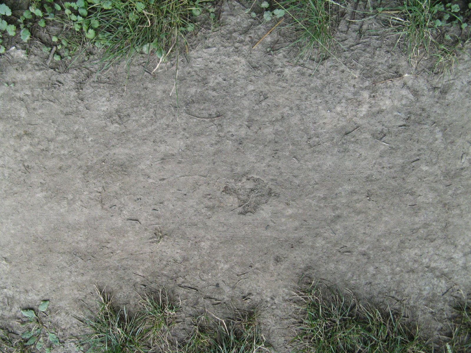 Boden-Gras-Moos-Blumen_Textur_B_00924