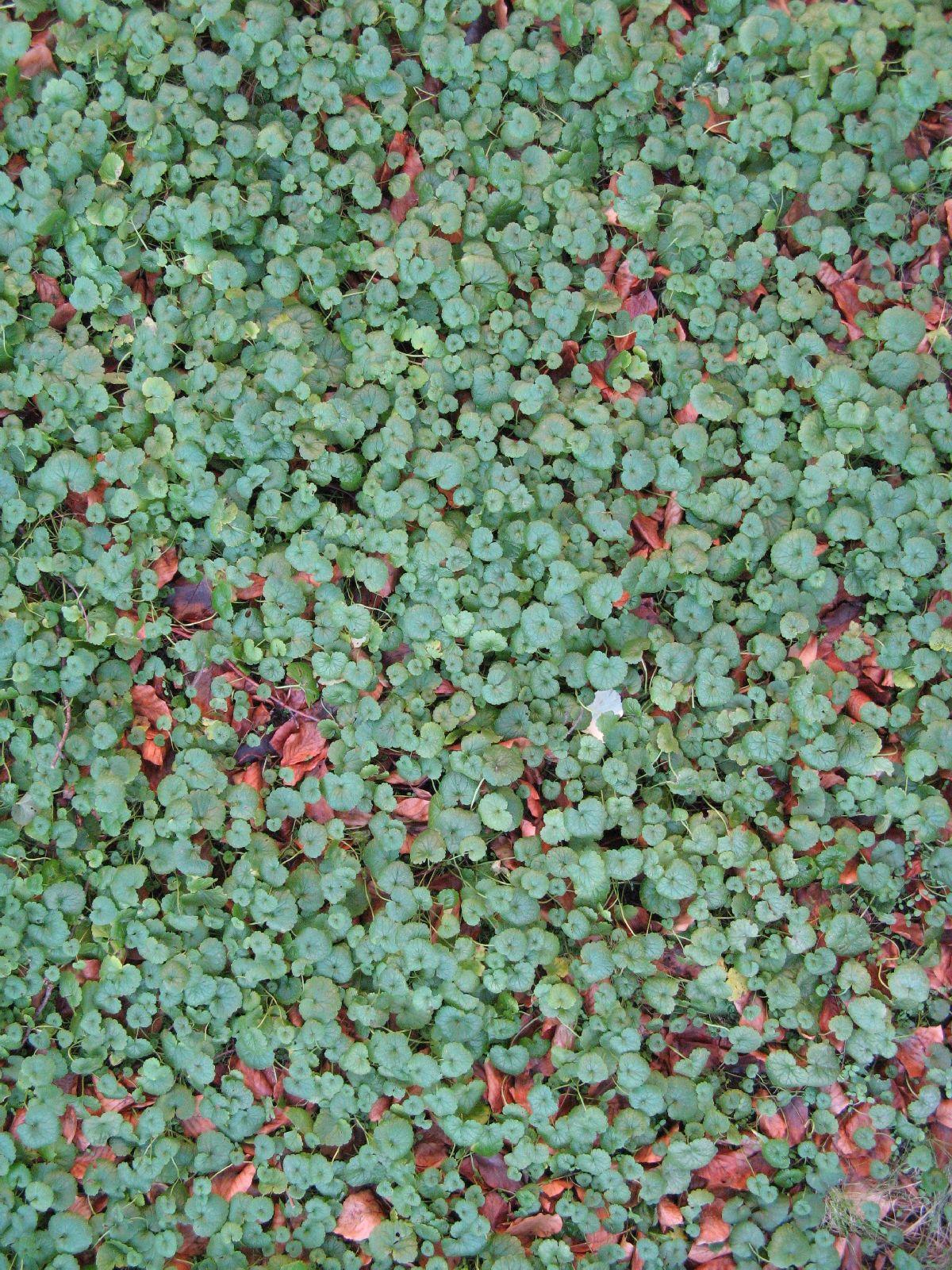 Boden-Gras-Moos-Blumen_Textur_B_02732