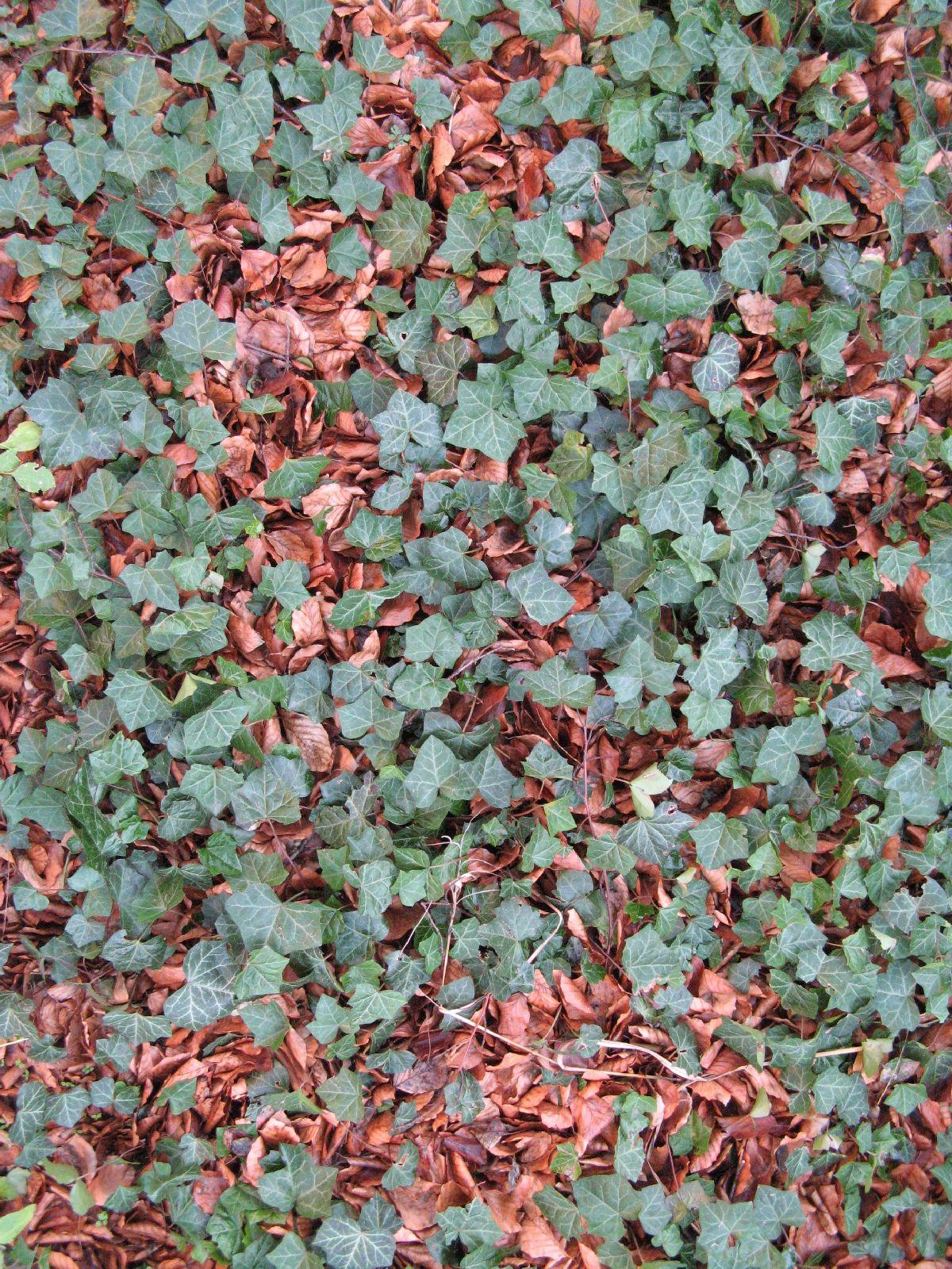 Boden-Gras-Moos-Blumen_Textur_B_02736