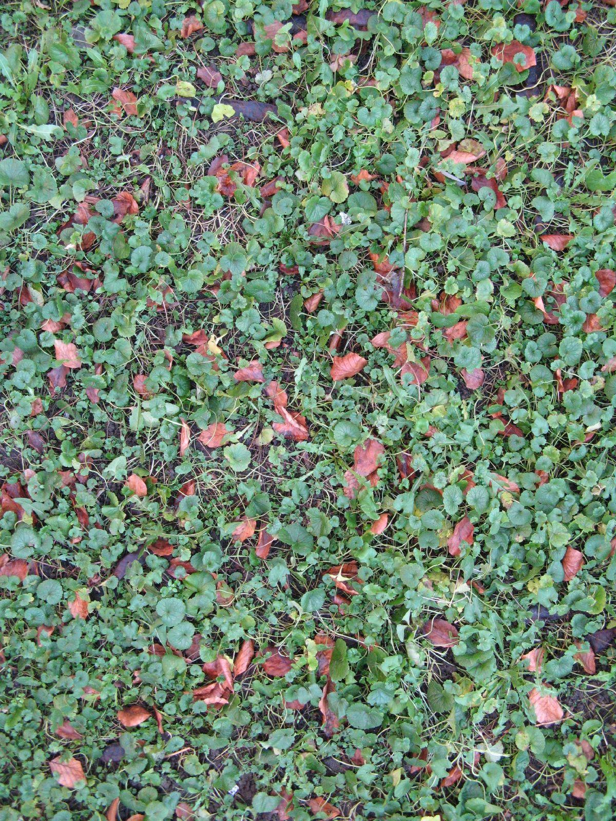 Boden-Gras-Moos-Blumen_Textur_B_02740