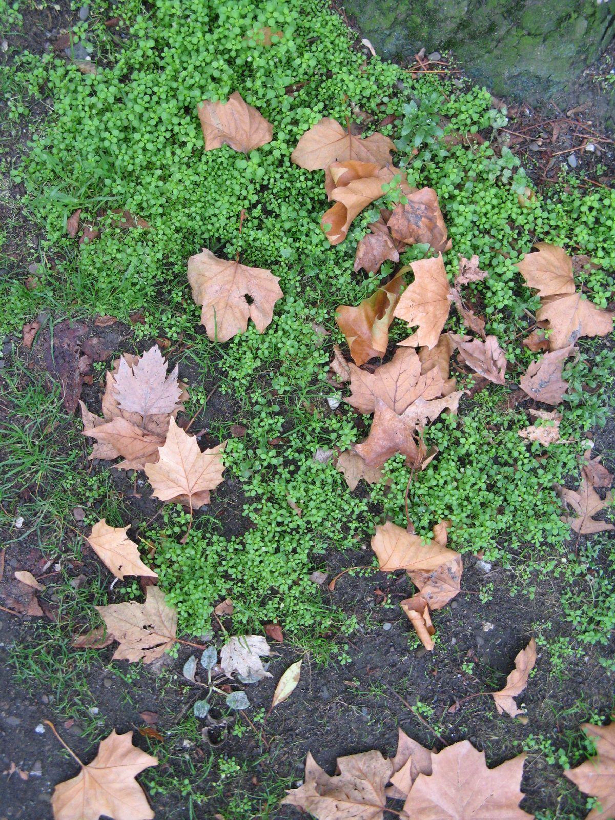 Boden-Gras-Moos-Blumen_Textur_B_09200