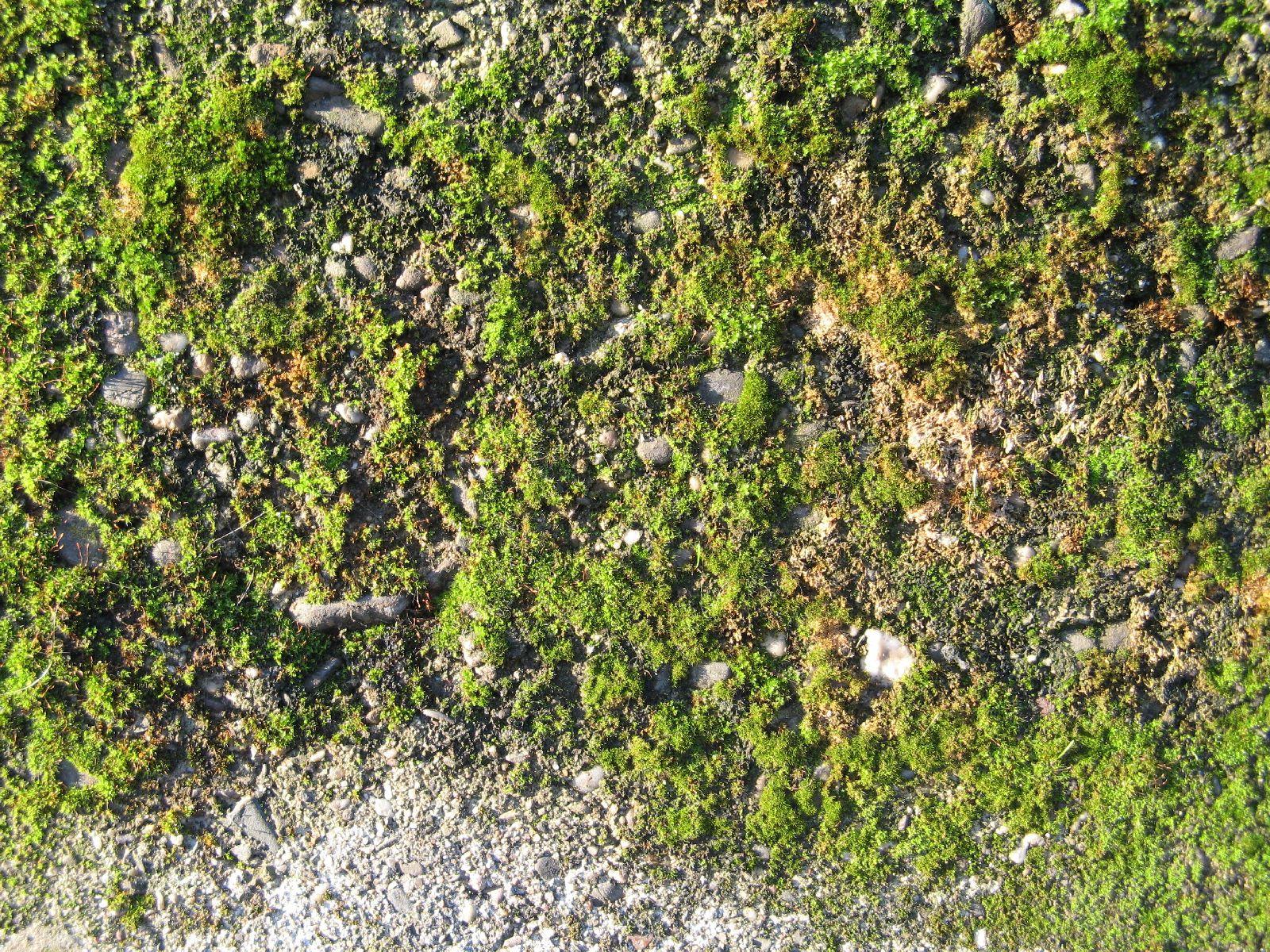 Boden-Gras-Moos-Blumen_Textur_B_10580
