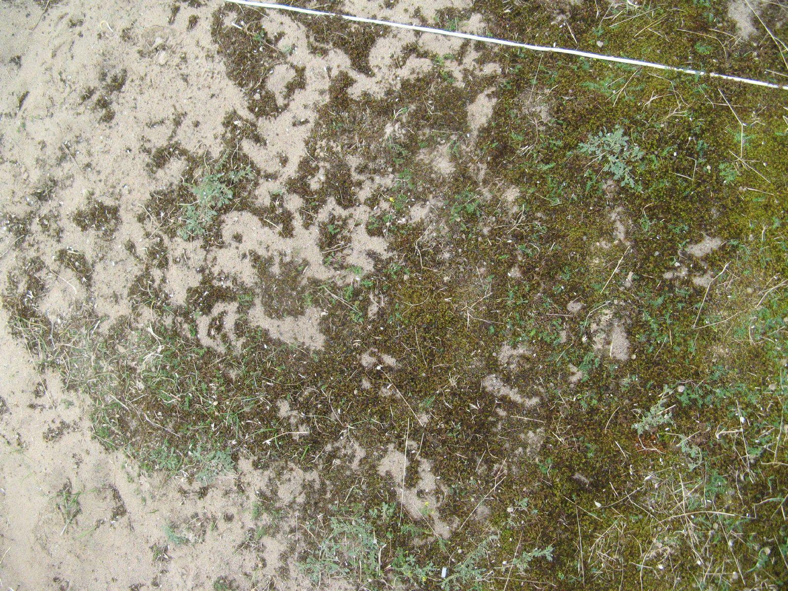 Boden-Gras-Moos-Blumen_Textur_B_2112