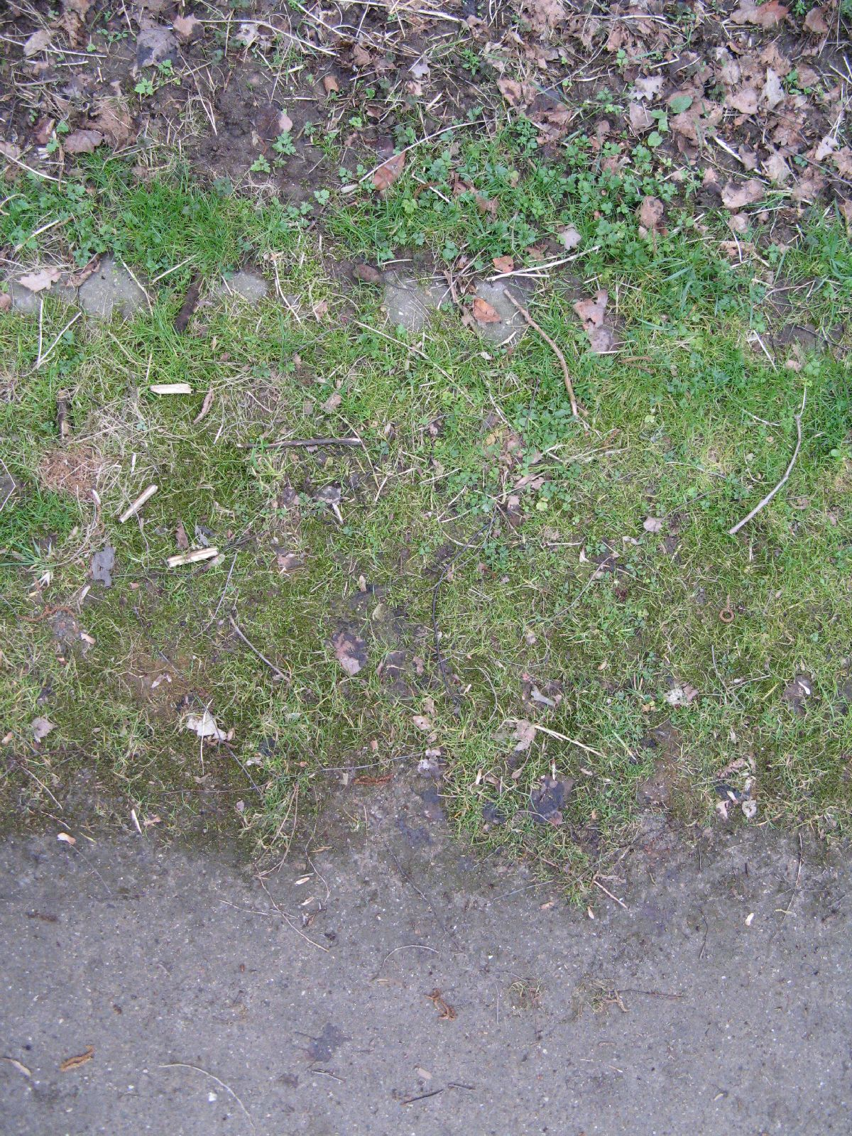 Boden-Gras-Moos-Blumen_Textur_B_5593