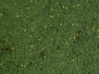 Boden-Gras-Moos-Blumen