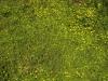 Boden-Gras-Moos-Blumen_Textur_A_P4101894