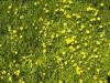 Boden-Gras-Moos-Blumen_Textur_A_P4101897