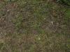 Boden-Gras-Moos-Blumen_Textur_A_P4120796