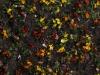 Boden-Gras-Moos-Blumen_Textur_A_P4120809