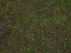 Boden-Gras-Moos-Blumen_Textur_A_P4120844