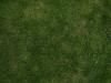 Boden-Gras-Moos-Blumen_Textur_A_P4120845