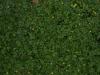 Boden-Gras-Moos-Blumen_Textur_A_P4120849
