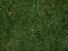 Boden-Gras-Moos-Blumen_Textur_A_P4120852