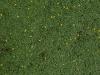 Boden-Gras-Moos-Blumen_Textur_A_P4120856