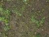 Boden-Gras-Moos-Blumen_Textur_A_P4131088