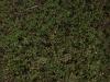 Boden-Gras-Moos-Blumen_Textur_A_P4131149