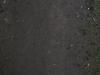 Boden-Gras-Moos-Blumen_Textur_A_P4131183