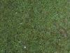 Boden-Gras-Moos-Blumen_Textur_A_P4171289