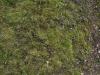 Boden-Gras-Moos-Blumen_Textur_A_P4171316