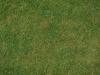 Boden-Gras-Moos-Blumen_Textur_A_P4222586