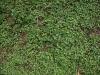 Boden-Gras-Moos-Blumen_Textur_A_P4231717