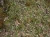 Boden-Gras-Moos-Blumen_Textur_A_P4231737