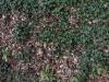 Boden-Gras-Moos-Blumen_Textur_A_P4241785