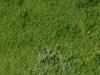 Boden-Gras-Moos-Blumen_Textur_A_P4241791