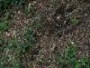 Boden-Gras-Moos-Blumen_Textur_A_P5072558
