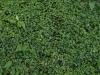Boden-Gras-Moos-Blumen_Textur_A_P5072559