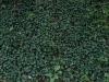 Boden-Gras-Moos-Blumen_Textur_A_P5072561