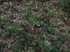 Boden-Gras-Moos-Blumen_Textur_A_P5072562