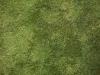 Boden-Gras-Moos-Blumen_Textur_A_P5224447