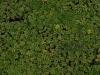 Boden-Gras-Moos-Blumen_Textur_A_P6083339