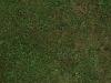 Boden-Gras-Moos-Blumen_Textur_A_P6083342