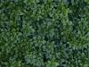 Boden-Gras-Moos-Blumen_Textur_A_P6293848