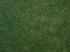 Boden-Gras-Moos-Blumen_Textur_A_P9285541