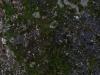 Boden-Gras-Moos-Blumen_Textur_A_P9285597