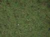 Boden-Gras-Moos-Blumen_Textur_A_PA035635