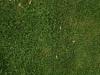 Boden-Gras-Moos-Blumen_Textur_A_PA039929