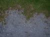 Boden-Gras-Moos-Blumen_Textur_A_PA045777