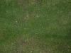 Boden-Gras-Moos-Blumen_Textur_A_PA045781