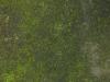 Boden-Gras-Moos-Blumen_Textur_A_PA250544