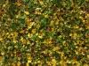 Boden-Gras-Moos-Blumen_Textur_A_PA260556